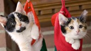 beautiful-christmas-cats-hanging-wallpaper