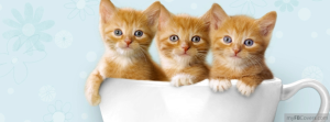 cute-facebook-timeline-covers-kittens