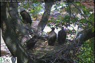 To see a live view from this cam, visit http://www.pixcontroller.com/eagles/