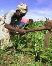 subsistence_farming