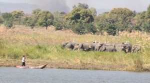 Elephants&Boat