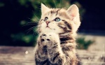 Cute-Kittens-and-Babies-17-HD-Images-Wallpapers