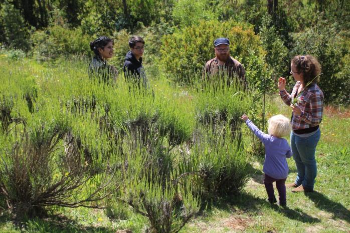 A walk through the herbal and medicinal garden