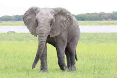 9elephant
